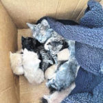 Cats, kittens dumped at local business