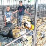 Youngsters excited to show animals at the fair