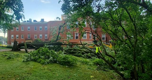 Mount Gilead had a number of trees down Thursday after a storm moved through the village. This one is near the Morrow County Courthouse downtown.