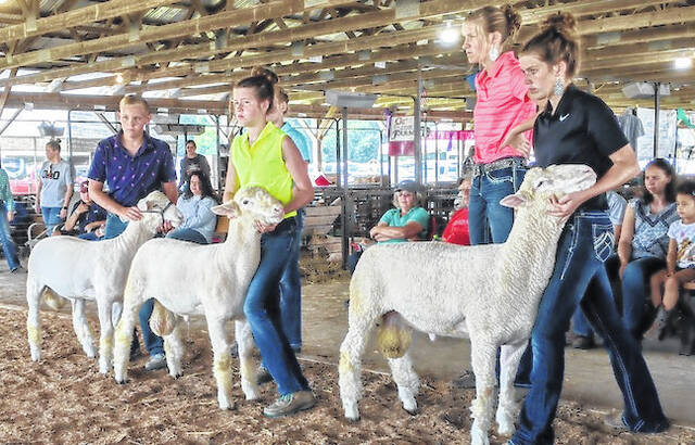 Youth keep their eye on Judge Nick Fowler as they show Dorset rams at the Sheep Breeding Show. Livestock judges take time to speak with 4-H and FFA youth individually.