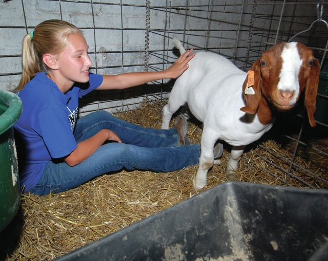 Mike Ullery| Daily Call Emma Lehman, 12, of the Union Township Meat Producers 4-H Club spends some time with her goat at the Miami County Fair on Friday.
