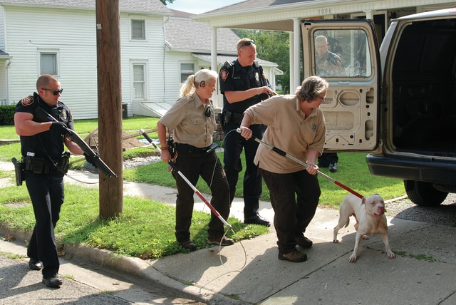 Mike Ullery | Daily Call Piqua police and officers from the Miami County Animal Shelter remove a pit bull from 1006 Madison in Piqua on Wednesday after the dog attacked two people.