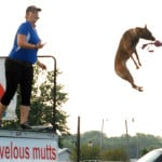High-flying canines thrill audiences