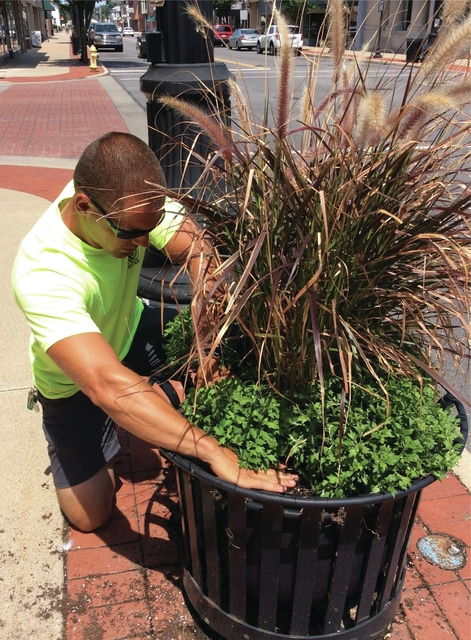 Courtesy photo City of Piqua parks employee Ben Gover plants mums downtown as part of the ongoing beautification project.