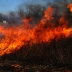 Park district conducts prairie burns