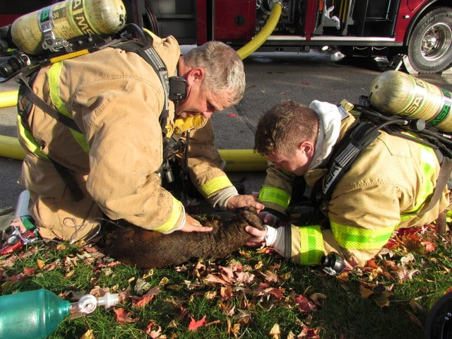 "Troy Fire fighters give oxygen to ""Daisy"" a dog found inside of a burning home on Locust Wednesday afternoon. No injuries were reported."