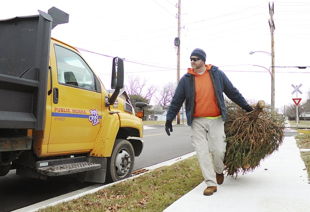 Anthony Weber | Troy Daily News City of Troy equipment operator Matt Harbour picks up several Christmas trees in the historic district Thursday in Troy. According to Harbour, the city may continue collecting the trees through the first week of February.