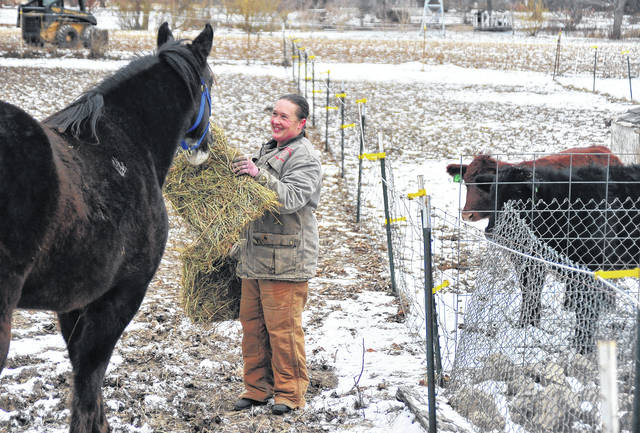 Mike Ullery | Daily Call Sarah Fraley of Covington feeds extra hay to her horses and cattle during cold weather. Fraley said that livestock burn more calories as their bodies attempt to stay warm, so the extra food is necessary to help them fend off the extreme cold.