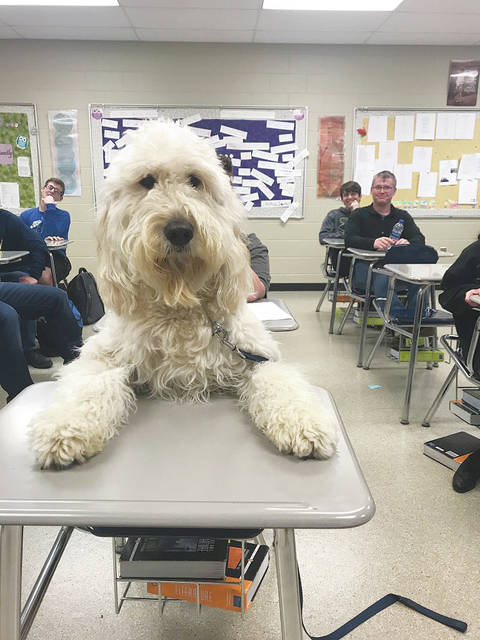 Provided Photo Arleigh sits ready to learn in a class at Miami East High School. Miami East social studies teacher Nicole Bailey owns Arleigh, a trained service/therapy dog. He is a daily fixture at the school.