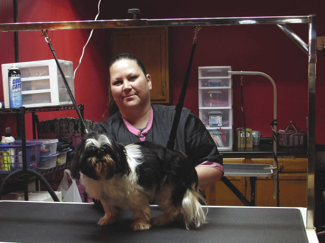 Sam Wildow | Daily Call Roxanne Wintrow, co-owner of Dirty Dog Pet Salon at 413 N. Main St., works on grooming Abby at her new dog grooming business in downtown Piqua.