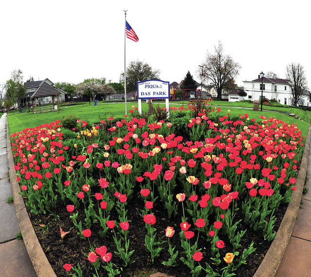 Mike Ullery | Daily Call The corner of Broadway and Park Avenue is abloom thanks to the Four Seasons Garden Club, who planted more than 1,200 colorful tulips at Das Park.