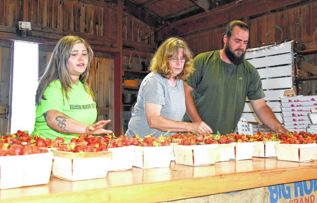 Cody Willoughby | Troy Daily News Kali Stinson, Phyllis Matheny, and Joe Fulton prepare quarts of strawberries for customers in the Fulton Farms market on Thursday.