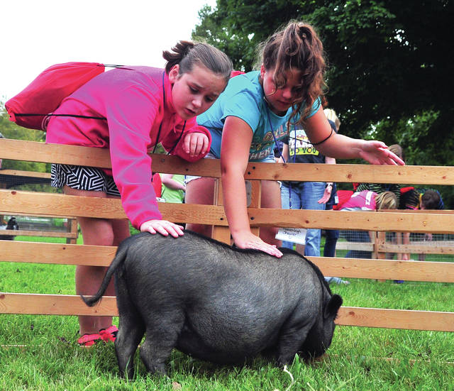 Mike Ullery | Daily Call Piqua Central Intermediate fifth graders Madison Haworth and Heavenleigh Shaurer make friends with a pot-bellied pig during Farm Day at the Miami County Park District's Lost Creek Reserve on Friday. The event was sponsored by PCIS business partner Hartzell Propeller.