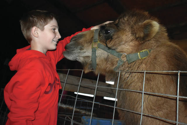 Cody Willoughby | Troy Daily News Andrew York, 12, of Troy meets a camel during a live nativity on Wednesday at Fulton Farms, sponsored by the Church of Jesus Christ of Latter Day Saints. The event will continue at Fulton Farms through Sunday.