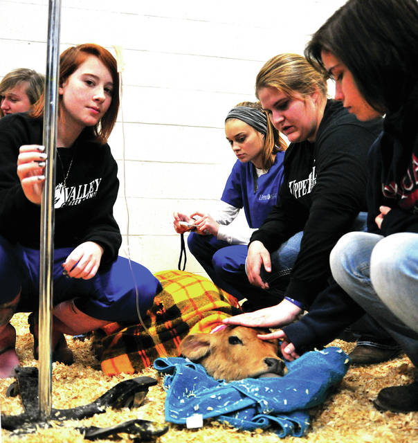 Mike Ullery | Daily Call Upper Valley Career Center Veterinary Science seniors Taylor Schneider of Troy, Kaycee Fortkamp of Sidney, Joelle Cecil of Sidney, Aubrey Tamplin of Troy, Katelynn Pence of Piqua, and Jasamin Young of Piqua care for a sick calf at the Upper Valley Carer Center on Tuesday. The calf, under the care of Dr. Deb Stanfield, fell ill last week and was brought in to the facility where students can assist in attempting to save the two-week-old animals life.