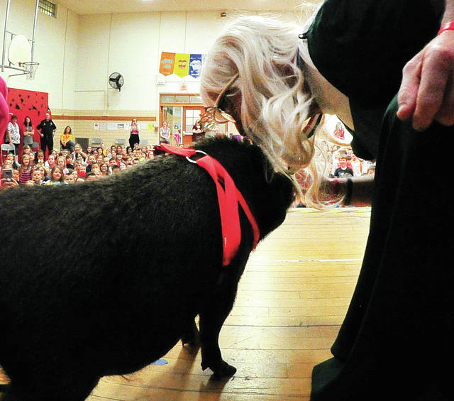 "Principal Paul Hohlbein of Forest Elementary School in Troy kisses Oscar Mayer Weaver, a miniature pig, in front of his students on Friday afternoon, fulfilling a promise to ""kiss a pig while wearing a dress, a wig, and lipstick,"" if students raised at least $1,000 for the Leukemia/Lymphoma Society. The fundraiser, sponsored by the Forest Student Council, raised $1,118 dollars. ©2019 Miami Valley Sunday News, All rights reserved"