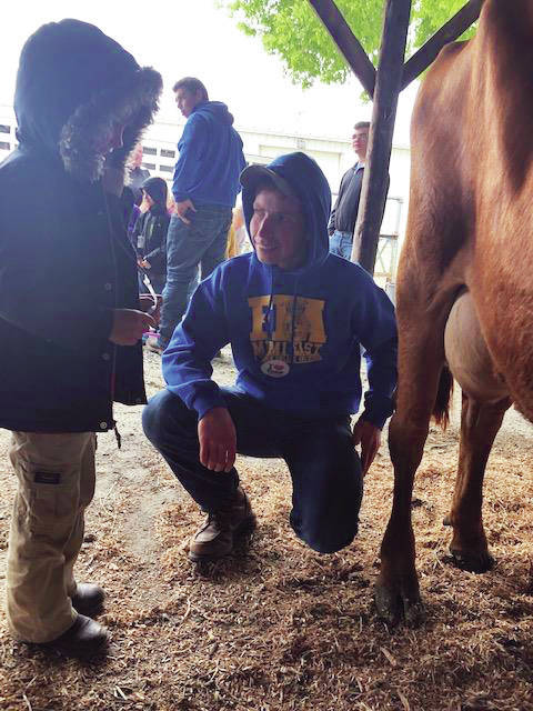 Miami East High School junior Michael Bair shows a kindergarten student how to milk a cow during the annual Miami East FFA Ag Day at the Miami County Fairgrounds on Friday. Bair's family brought three types of cows from Bair Trax Farm for children to learn more about milk.