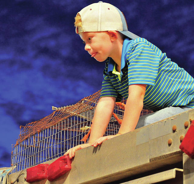"Cash Wheelock, 5, of West Milton has the ""best seat in the house"" as he watches Sunday's Livestock Scramble from atop a livestock trailer at the Miami County Fair ©2019 Miami Valley Today. All rights reserved."