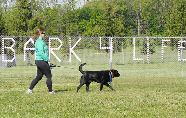 Michele Grise, of Piqua, walks through Duke Park with her black labrador retriever, Remington, during the 2017 Bark For Life event in Troy.