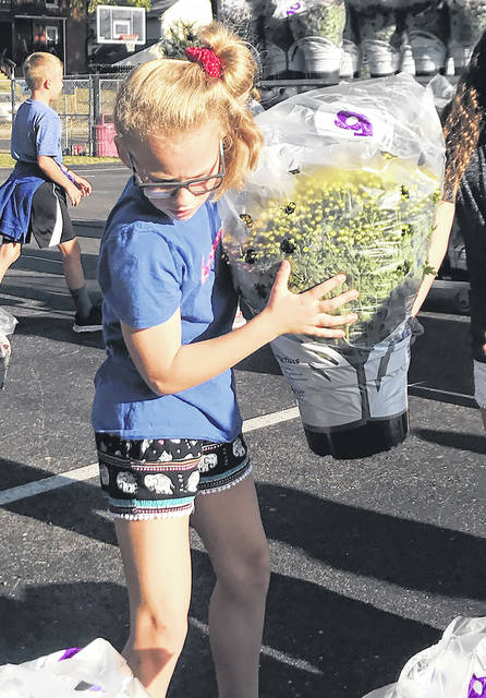 Provided photo Forest Elementary School student Livi Luciano helps unload and sort mums Thursday in the Forest parking lot. The mums, sold as part of a PTO fundraiser, will be distributed by students and their families.