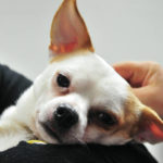 Dog thrown from moving truck