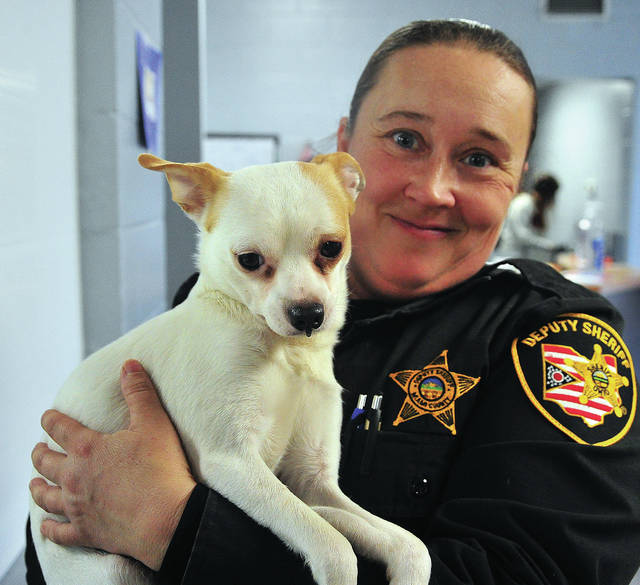Deputy Sarah Fraley of the Miami County Sheriff's Office holds Chance, a 2-year-old Chihuahua that was thrown from a moving vehicle earlier this week. Chance has been released from the Troy Animal Hospital and is recuperating at the Miami County Animal Shelter.