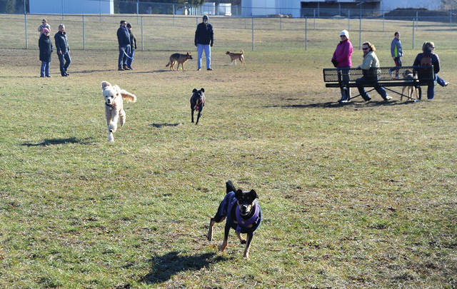 A number of dogs and their owners took advantage of pre-spring weather on Saturday to get some exercise at the Duke Park dog park.