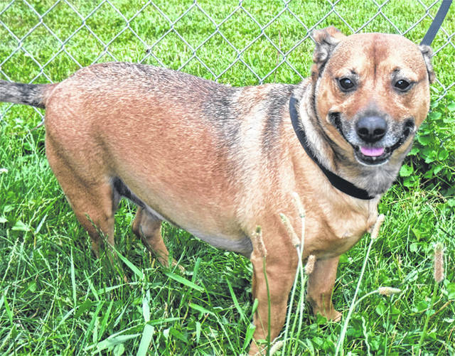 Submitted photo This cute, chunky pup is a terrier mix. Penelope has found herself at Greene County Animal Control and is looking for a family or individual to adopt her. She's vet-checked and ready to go to her new home.
