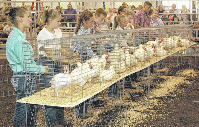 Class winners wait to be judged during the market chicken show.