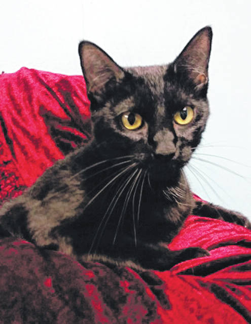 Submitted photo Joan Jet has recently become an empty-nester. This 2-year-old domestic short-haired black cat is now looking for a new home. Like all of GCAC adoptable animals, she's been spayed, vet-checked and vaccinated.
