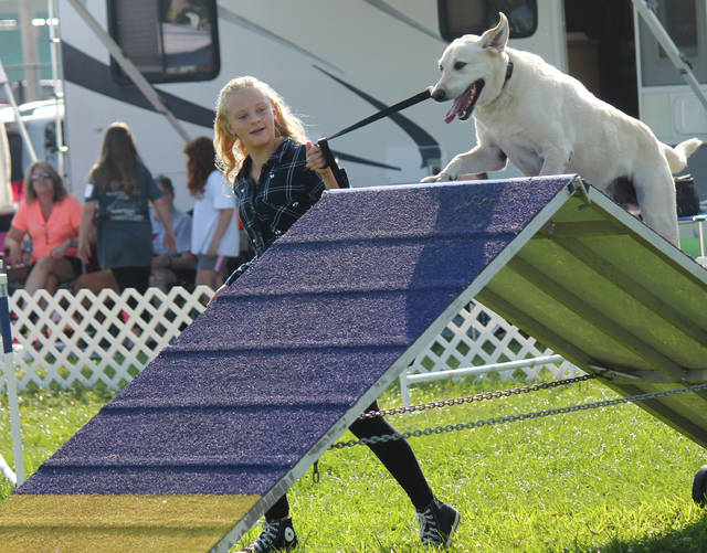 Anna Bolton | Greene County News Gracie Heiter and Toby run the agility course together during the Dog Show Aug. 3 at the Greene County Fairgrounds.