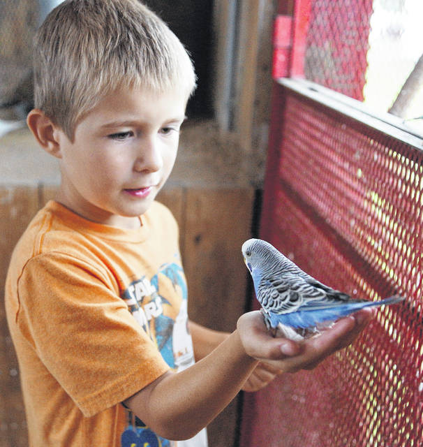 Barb Slone | Greene County News The Parakeet Encounter at the Greene County Fair brings the experience of the small colorful birds up close and personal. Participants enter the trailer as the hundreds of parakeets tweet and land at eye level to give a greeting.