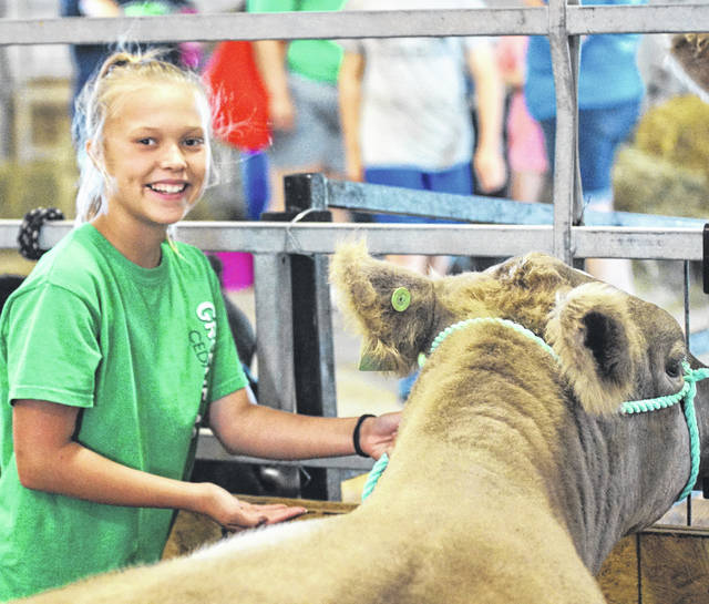 Sydnee Hawkins gets her cow settled into the stall.