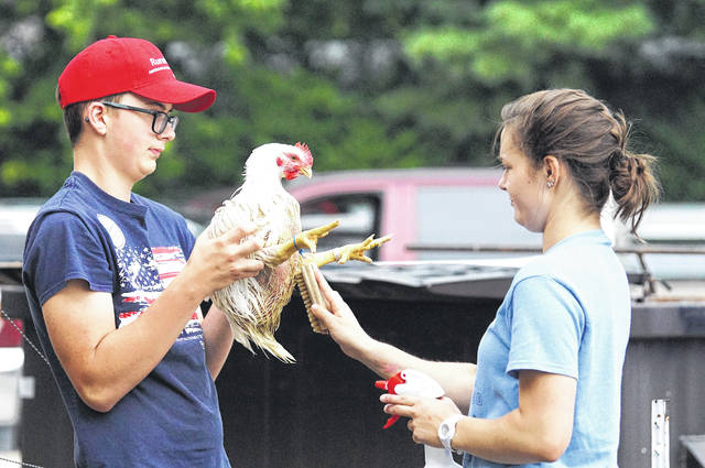 Barb Slone Colleen and Dalton Curtis work together to care for one of their chickens.