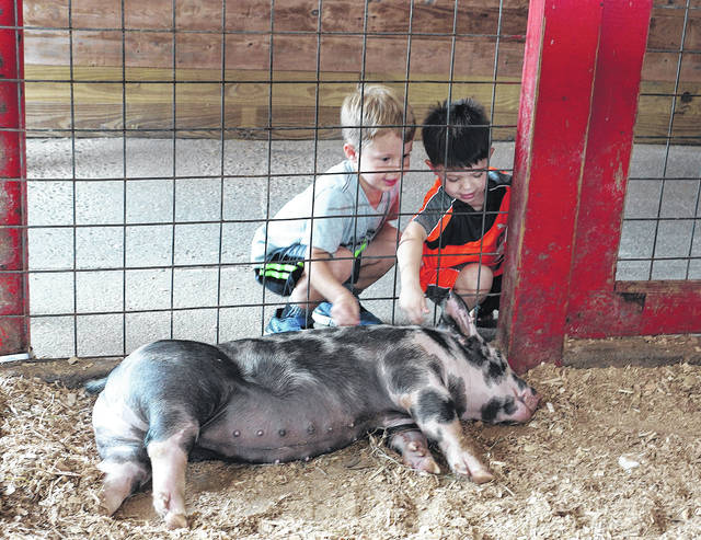Barb Slone | Greene County News Youngs Jersey Dairy, 6880 Springfield-Xenia Road, hosted a special family day during the holiday weekend. Udders & Putters miniature golf, Cowvin's Fast Slide, Cowvin's Kiddie Corral, Cowvin's Corny Maze and Wagon Ride on the Farm.