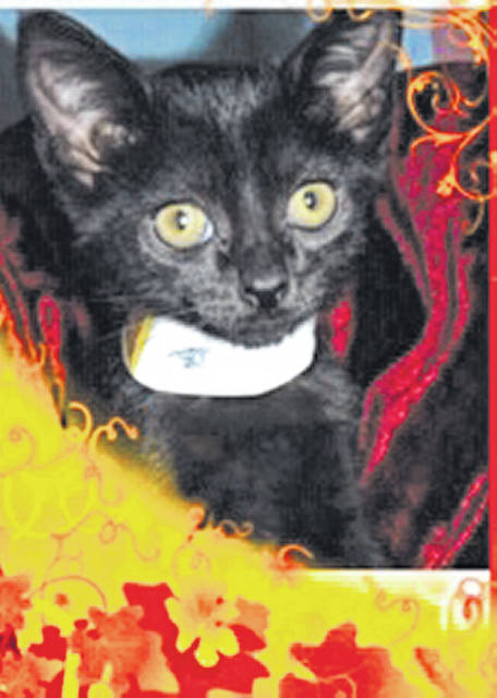 Photo courtesy of Greene County Animal Control Minnow is a female black domestic short-haired kitten. This beautiful 3-month old feline is waiting at GCAC for someone to bring her home. She'd love to have her own family before the holidays. Minnow has been spayed, vaccinated and vet-checked.