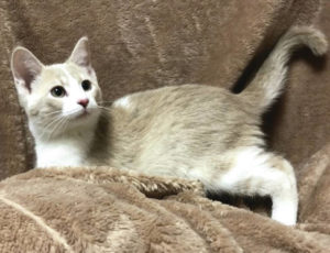 Cat of the week: Queso