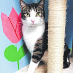 Cat of the week: Clarence