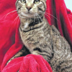Cat of the week: Jerry