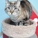 Cat of the week: Mai Tai