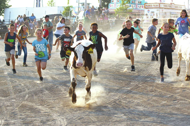 A stampede of kids chase after a calf during Sunday's Kiddie Calf Scramble at the Greene County Fair.
