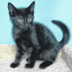 Kitten of the week: Larry