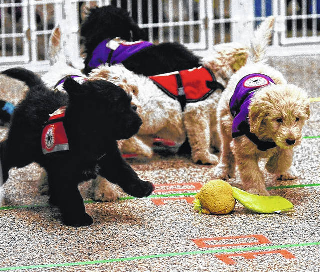 Barb Slone | Greene County News 4 Paws for Ability held its Pupp Bowl Feb. 1. Dogs were split into heats and ran races to determine winning numbers on a grid. The winning number received a raffle basket valued at $100 and puppy play time at 4 Paws.