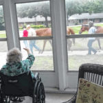 Therapy horses visit nursing home residents