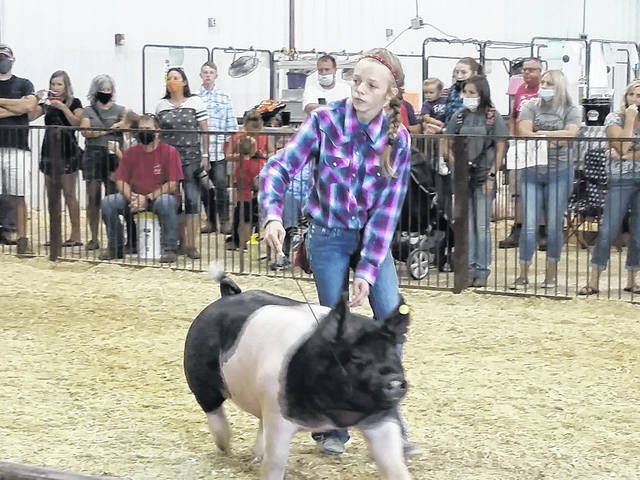 London Bishop | Greene County News Taylor Warner shows her hog during the champion drive Wednesday at the Greene County Fairgrounds.