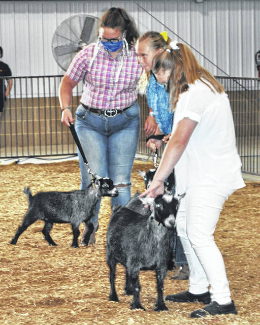 Scott Halasz | Greene Count County News Contestants in the pygmy goat show line up their animals.