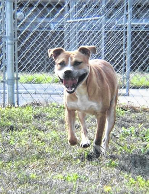 Photos courtesy GCAC Greene County Animal Care and Control has several dogs and cats ready to be adopted. Finn, a 2-year-old male, has been at the shelter since August.