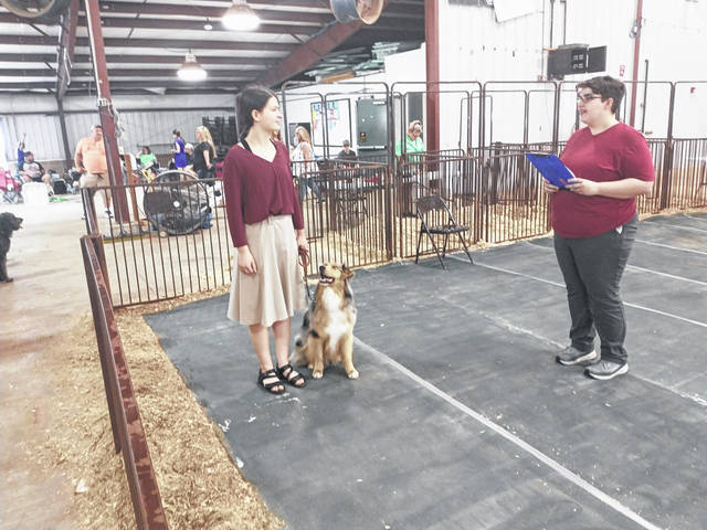 Photos by Darryl McGee   Greene County News On the final day of the 2021 Greene County Fair, dogs displayed their obedience skills in the Dog Showmanship, Obedience, and Rally event. The event was put on by Greene County 4 Pawz and Clawz Club.