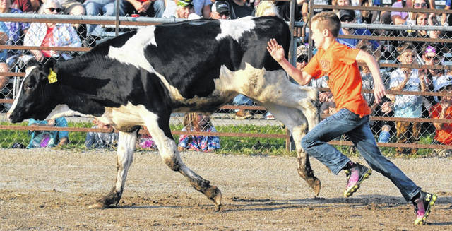 Photos by Barb Slone | Greene County News This kiddie calf scrambler shows perfect racing form as he tries to grab the adhesive tag off the back of the calf.