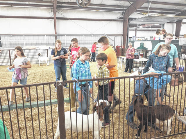 Photos by Darryl McGee | Greene County News Greene County 4-H members had the opportunity to judge goats during the fair last Thursday. The contest gives them an idea of what judges look for to better prepare them to show animals.